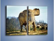 Obraz na płótnie – Ciężkie życie słonia – dwuczęściowy prostokątny pionowy Z273