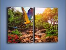 Obraz na płótnie – Kolorowa papuga w locie – dwuczęściowy prostokątny pionowy Z280