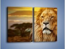 Obraz na płótnie – Dojrzały wiek lwa – dwuczęściowy prostokątny pionowy Z303