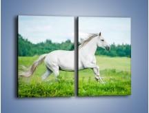 Obraz na płótnie – Biały koń i leśna polana – dwuczęściowy prostokątny pionowy Z317
