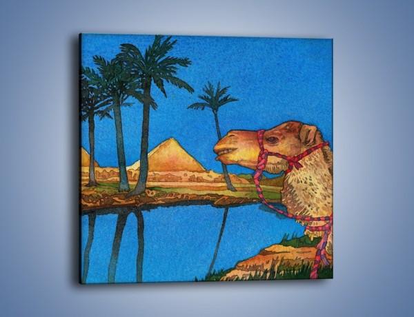 Obraz na płótnie – Piramidy i uśmiechnięty wielbłąd – jednoczęściowy kwadratowy GR047
