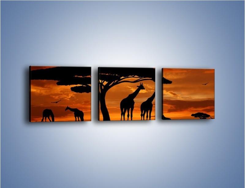 Obraz na płótnie – Żyrafy wieczorową porą – trzyczęściowy GR266W1