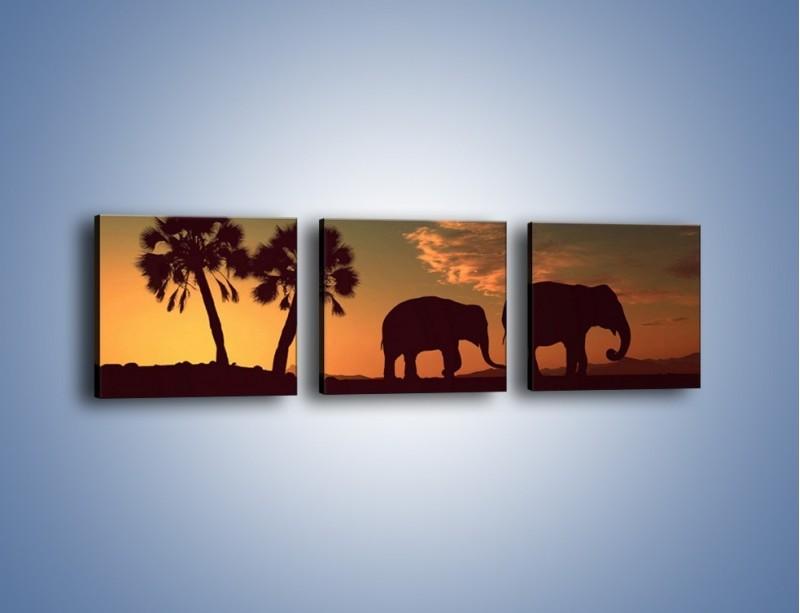 Obraz na płótnie – Powrót słoni do domu – trzyczęściowy GR286W1