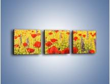 Obraz na płótnie – Cała łąka maków – trzyczęściowy GR480W1