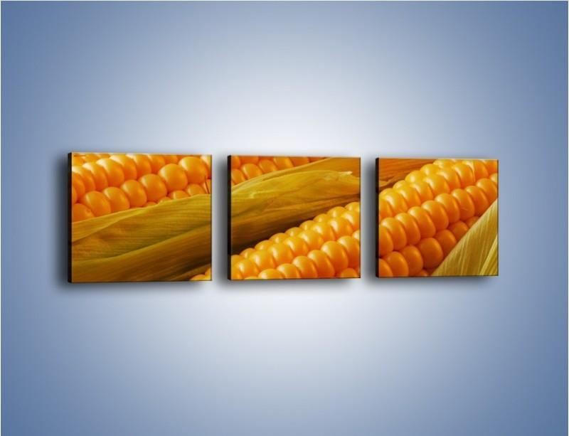 Obraz na płótnie – Kolby dojrzałych kukurydz – trzyczęściowy JN046W1