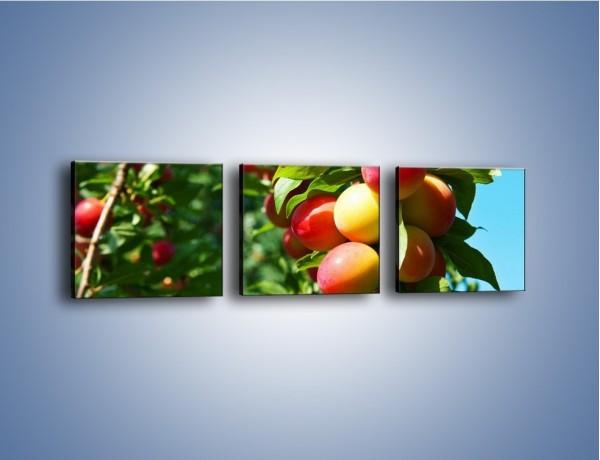 Obraz na płótnie – Drzewa pełne brzoskwiń – trzyczęściowy JN495W1