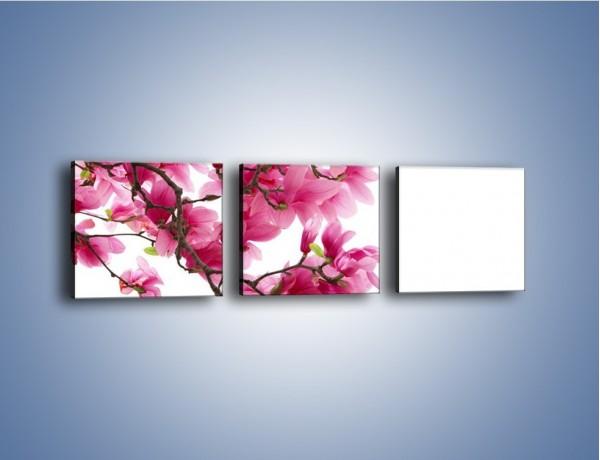 Obraz na płótnie – Kwiat wiśni na drzewie – trzyczęściowy K003W1