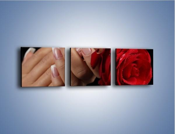 Obraz na płótnie – Kwiat róży w kobiecych dłoniach – trzyczęściowy K006W1