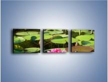 Obraz na płótnie – Ciemno-różowy nenufar na wodzie – trzyczęściowy K014W1
