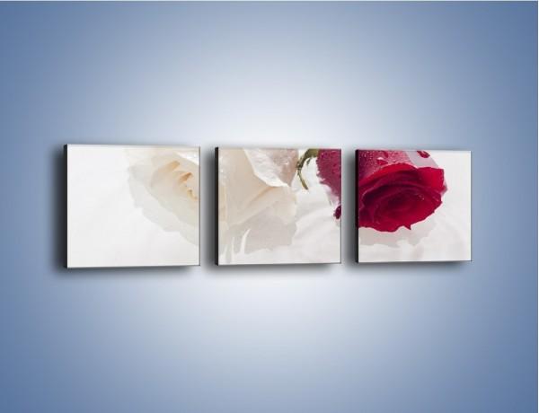 Obraz na płótnie – Róża biała czy czerwona – trzyczęściowy K077W1