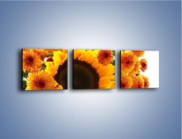 Obraz na płótnie – Słoneczniki nie tylko do jedzenia – trzyczęściowy K084W1