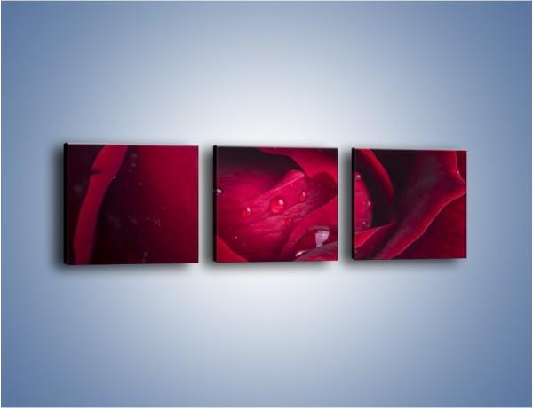 Obraz na płótnie – Ukryte myśli róży  – trzyczęściowy K1018W1