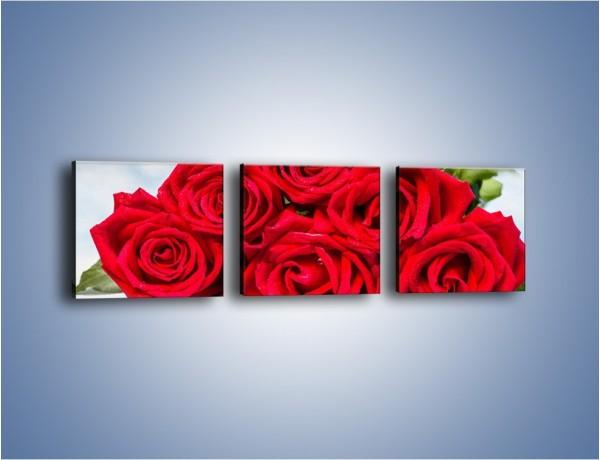 Obraz na płótnie – Czerwone róże bez kolców – trzyczęściowy K1021W1