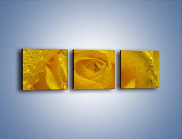 Obraz na płótnie – Zmoczone brzegi płatków – trzyczęściowy K1022W1