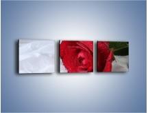 Obraz na płótnie – Bordowa róża na białej pościeli – trzyczęściowy K1023W1