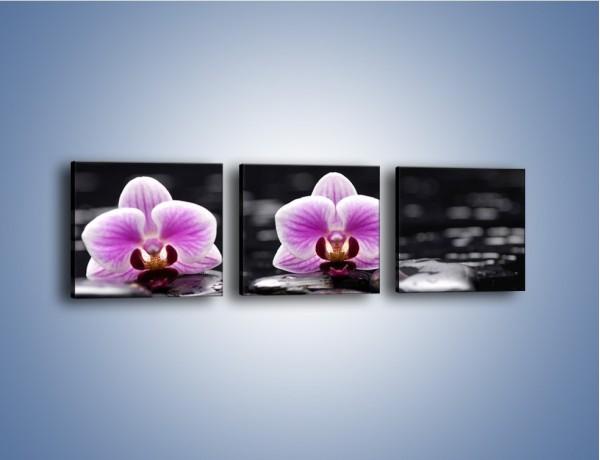 Obraz na płótnie – Duet kwiatowy i czarna woda – trzyczęściowy K1029W1