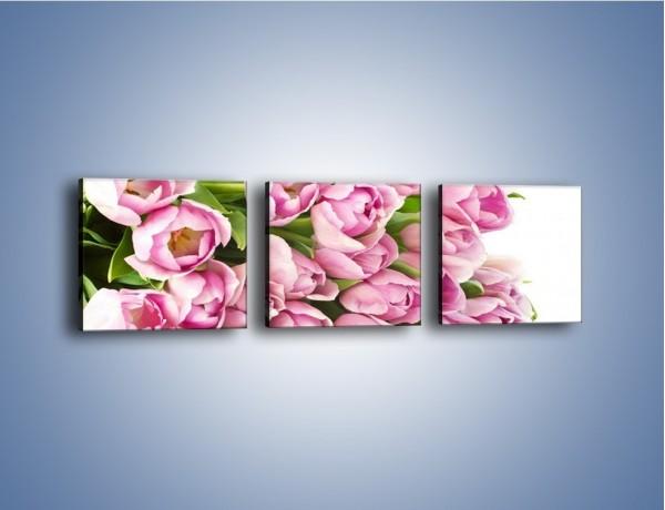 Obraz na płótnie – Ścięte tulipany w bieli – trzyczęściowy K110W1