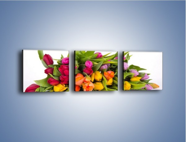 Obraz na płótnie – Kolorowe tulipany pełne luzu – trzyczęściowy K117W1