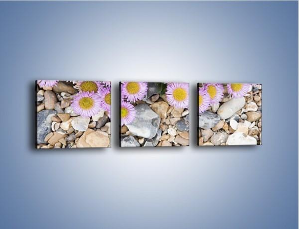 Obraz na płótnie – Kolorowe kamienie czy małe kwiatuszki – trzyczęściowy K146W1