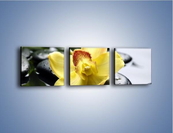 Obraz na płótnie – Żółty kwiat na mokrych kamieniach – trzyczęściowy K155W1