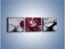 Obraz na płótnie – Bordowy storczyk i ciemne towarzystwo – trzyczęściowy K156W1
