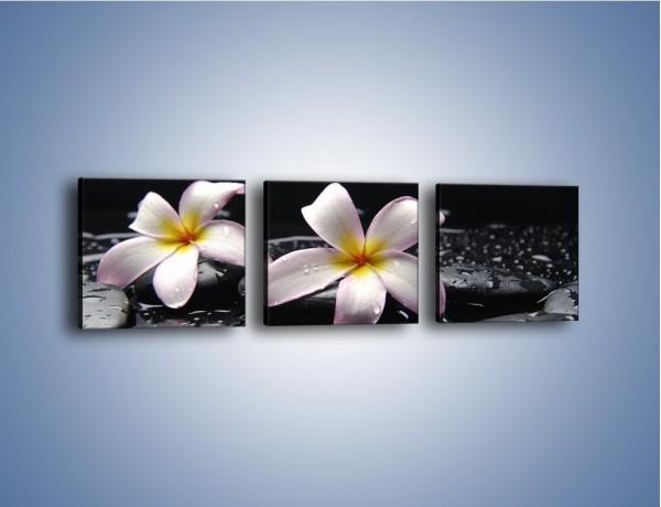 Obraz na płótnie – Delikatne kwiaty w kąpieli wodnej – trzyczęściowy K157W1