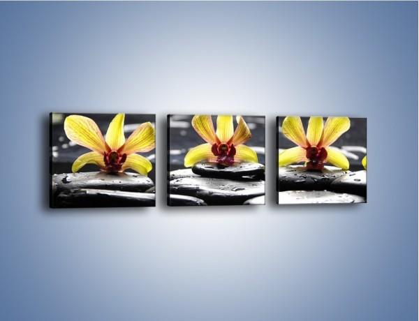 Obraz na płótnie – Storczykowe trio – trzyczęściowy K159W1