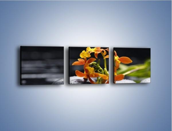 Obraz na płótnie – Gałązka małych storczyków – trzyczęściowy K160W1