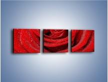 Obraz na płótnie – Czerwona moc w róży – trzyczęściowy K171W1