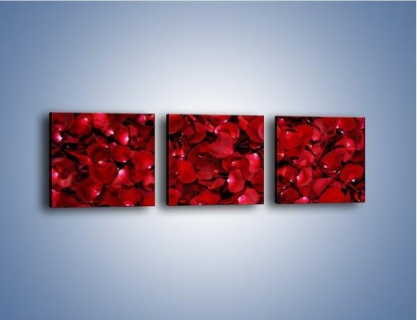 Obraz na płótnie – Dywan usłany płatkami róż – trzyczęściowy K175W1