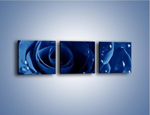Obraz na płótnie – Noc odbita w płatkach róż – trzyczęściowy K176W1