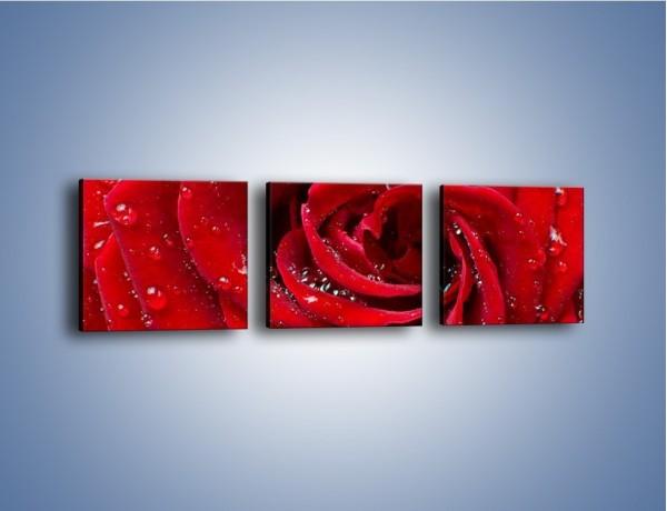Obraz na płótnie – Kwiat pełen miłości – trzyczęściowy K179W1