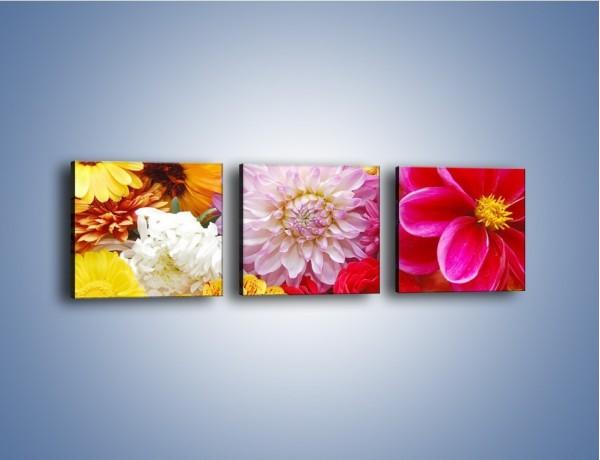 Obraz na płótnie – Letnie kwiaty z działki – trzyczęściowy K198W1