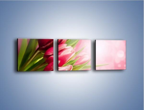 Obraz na płótnie – Promień świetlny odbity w kwiatach – trzyczęściowy K215W1