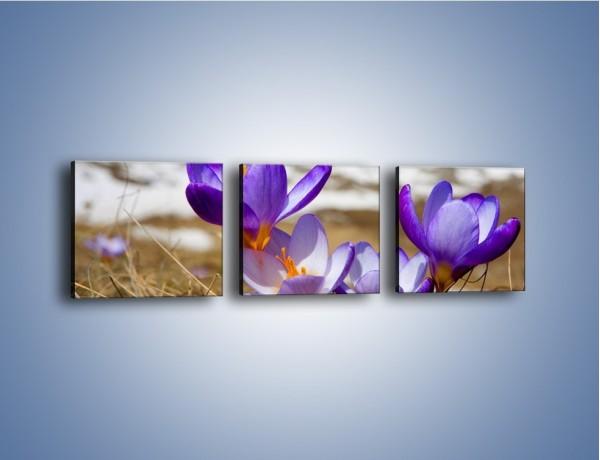 Obraz na płótnie – Zapowiedź wiosny w przebiśniegu – trzyczęściowy K225W1