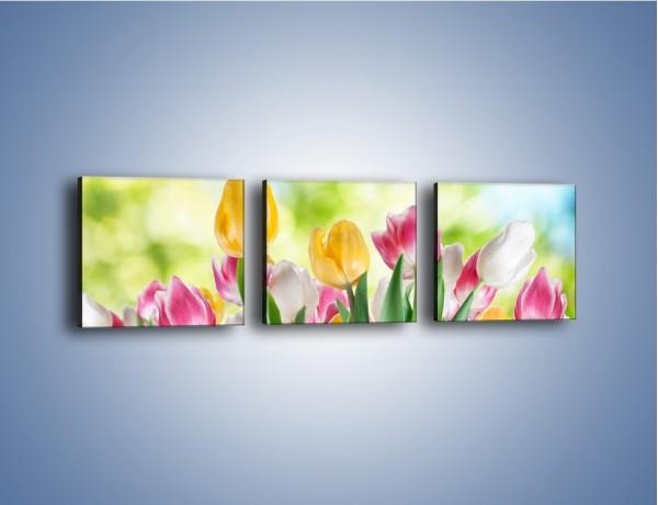 Obraz na płótnie – Tulipany pełne radości – trzyczęściowy K278W1