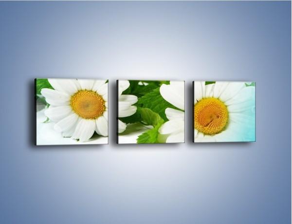 Obraz na płótnie – Kwiatowa para – trzyczęściowy K283W1
