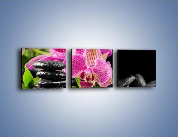 Obraz na płótnie – Kwiat i nie tylko – trzyczęściowy K309W1