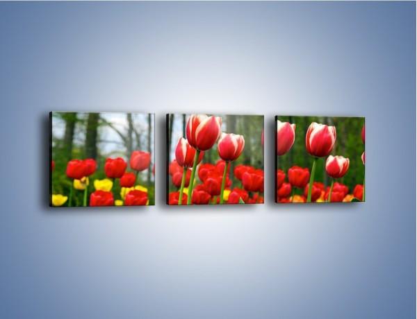 Obraz na płótnie – Leśna polana pełna tulipanów – trzyczęściowy K319W1
