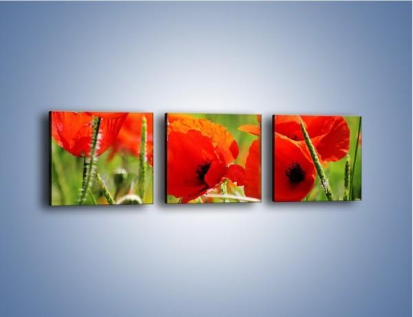 Obraz na płótnie – Wiosna w makach – trzyczęściowy K341W1