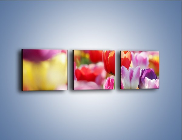 Obraz na płótnie – Boso przez tulipany – trzyczęściowy K344W1