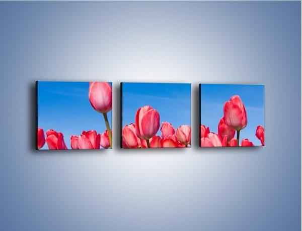 Obraz na płótnie – Tulipany czerwone jak nigdy – trzyczęściowy K345W1