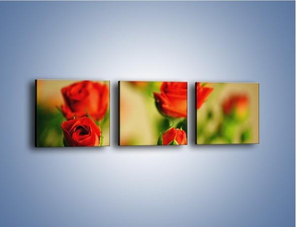 Obraz na płótnie – Po prostu róża – trzyczęściowy K358W1