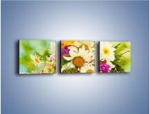 Obraz na płótnie – Bukiecik dla małej ogrodniczki – trzyczęściowy K369W1