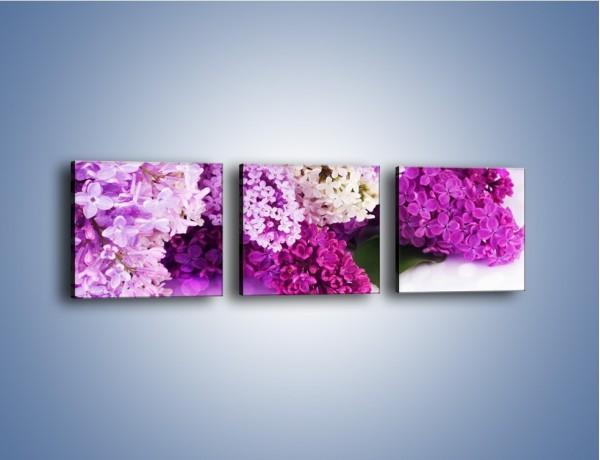 Obraz na płótnie – Bez w różnych kolorach – trzyczęściowy K389W1