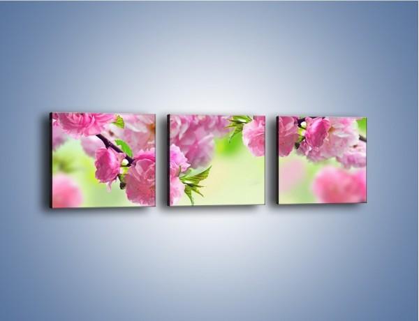 Obraz na płótnie – Gałąź chińskiej wiśni – trzyczęściowy K403W1