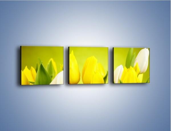Obraz na płótnie – Nie tylko tulipany – trzyczęściowy K425W1