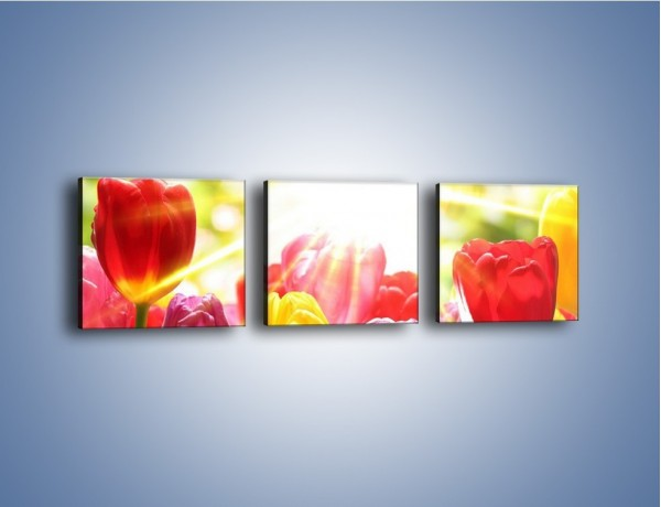 Obraz na płótnie – Bajecznie słoneczne tulipany – trzyczęściowy K428W1
