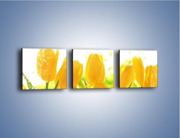 Obraz na płótnie – Skąpane w rosie tulipany – trzyczęściowy K429W1