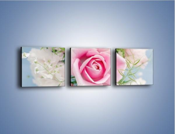 Obraz na płótnie – Róża z przesłaniem – trzyczęściowy K493W1